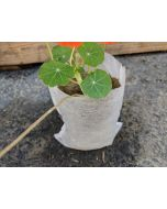 "100pcs 247Garden 3x4"" Eco-Friendly Aeration Seedling Pots/Nursery Fabric Plant Grow Bags (25GSM 8x10cm Non-woven Mini Fabric Pots)"