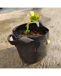 "247Garden Lucky Money Bonsai Tree Kit w/1-Gallon Black Aeration Fabric Pot+Handles (Included 1pc Baby Jade Succulent Plant Cutting 3-4"" +BPA-Free Breatheable Grow Bag) - No Soil Incl. w/100% Satisfaction Guaranteed"