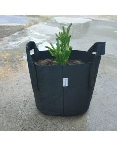 """247Garden's The Ogre's Ear Bonsai Tree Kit w/1-Gallon Black Aeration Fabric Pot w/Handles (Incl. 1pc Baby Jade Succulent Plant 3-4"""" Cutting w/Breatheable Grow Bag) - No Soil Included. 100% Satisfaction Guaranteed"""