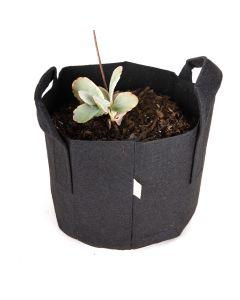 247Garden Lavender Scallops AKA Kalanchoe Fedtschenkoi Bonsai Flower Plant Kit w/1-Gallon Black Aeration Fabric Pot (-No Soil Included)