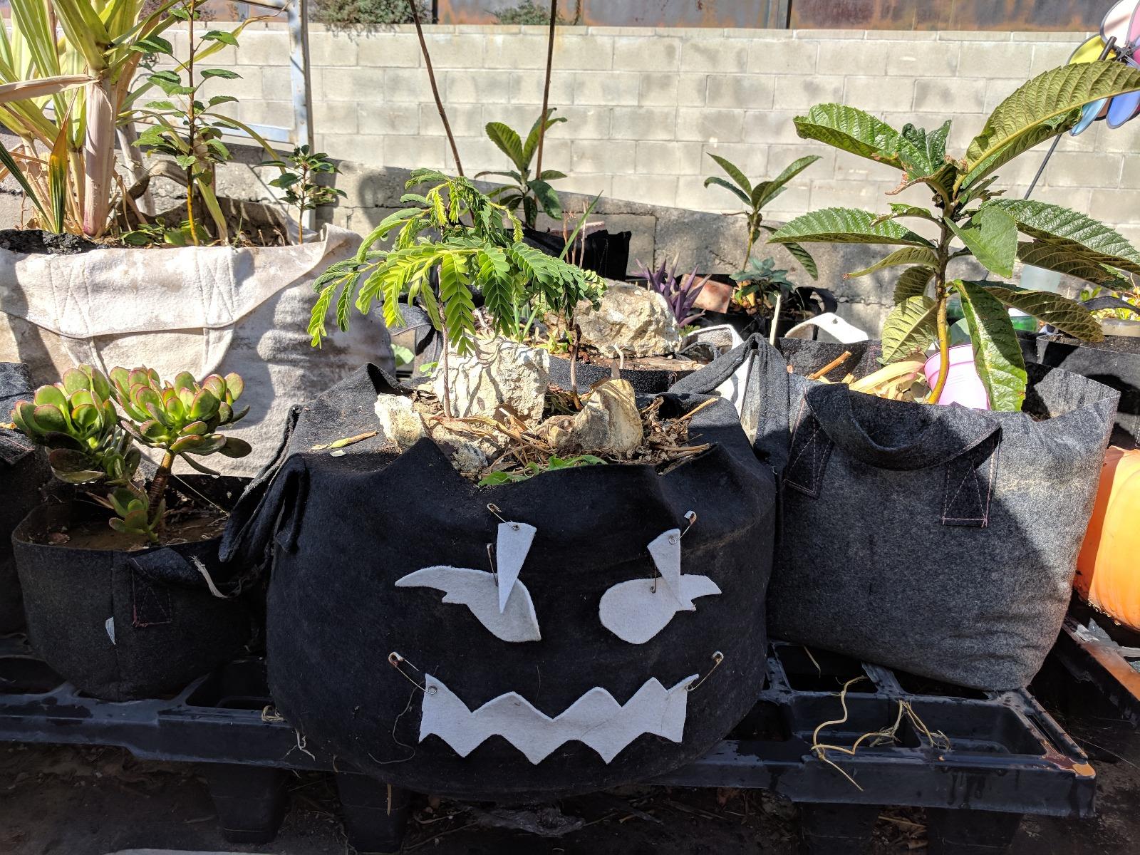 247Garden Grow Bags